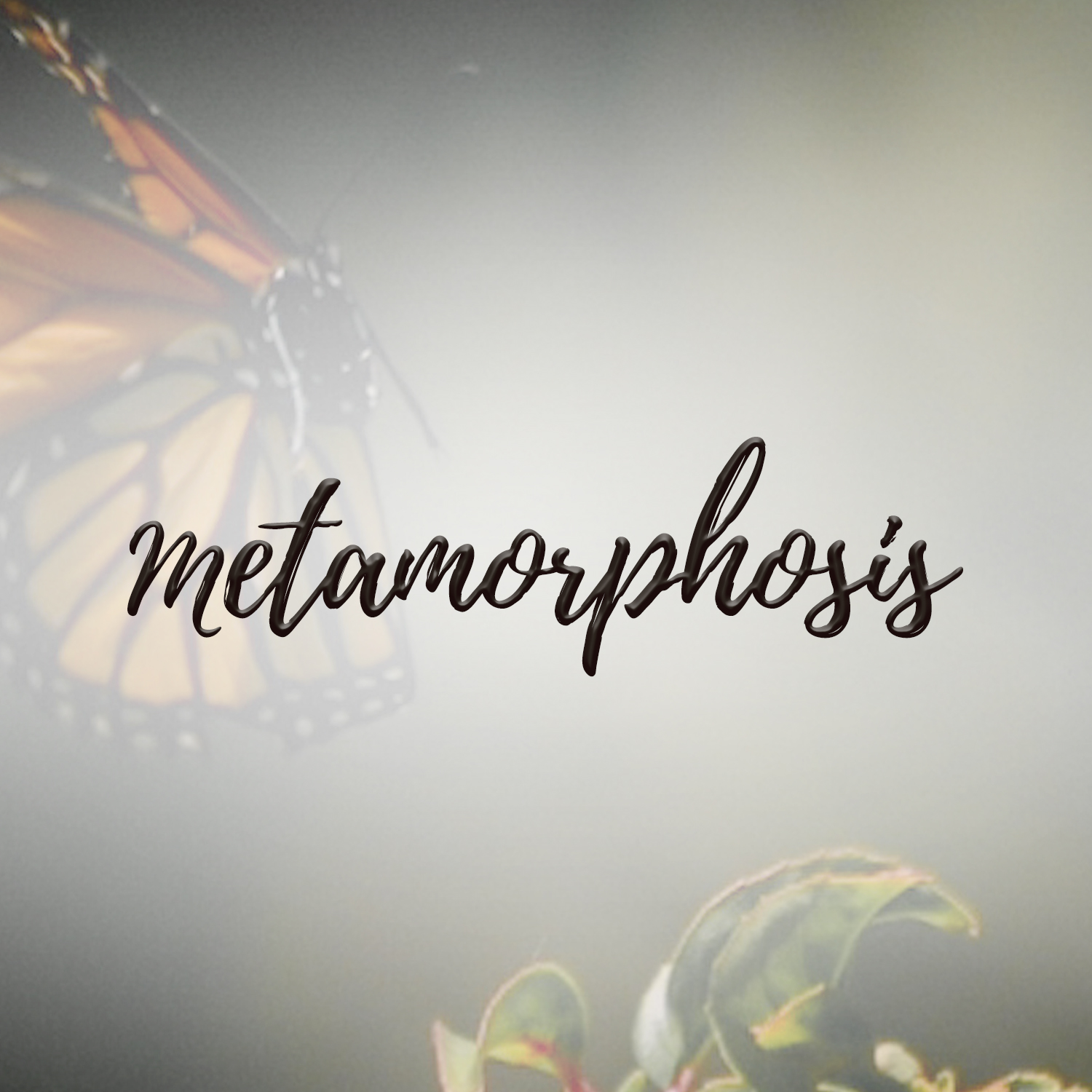 Metamorphosis, A Study in Ephesians 4